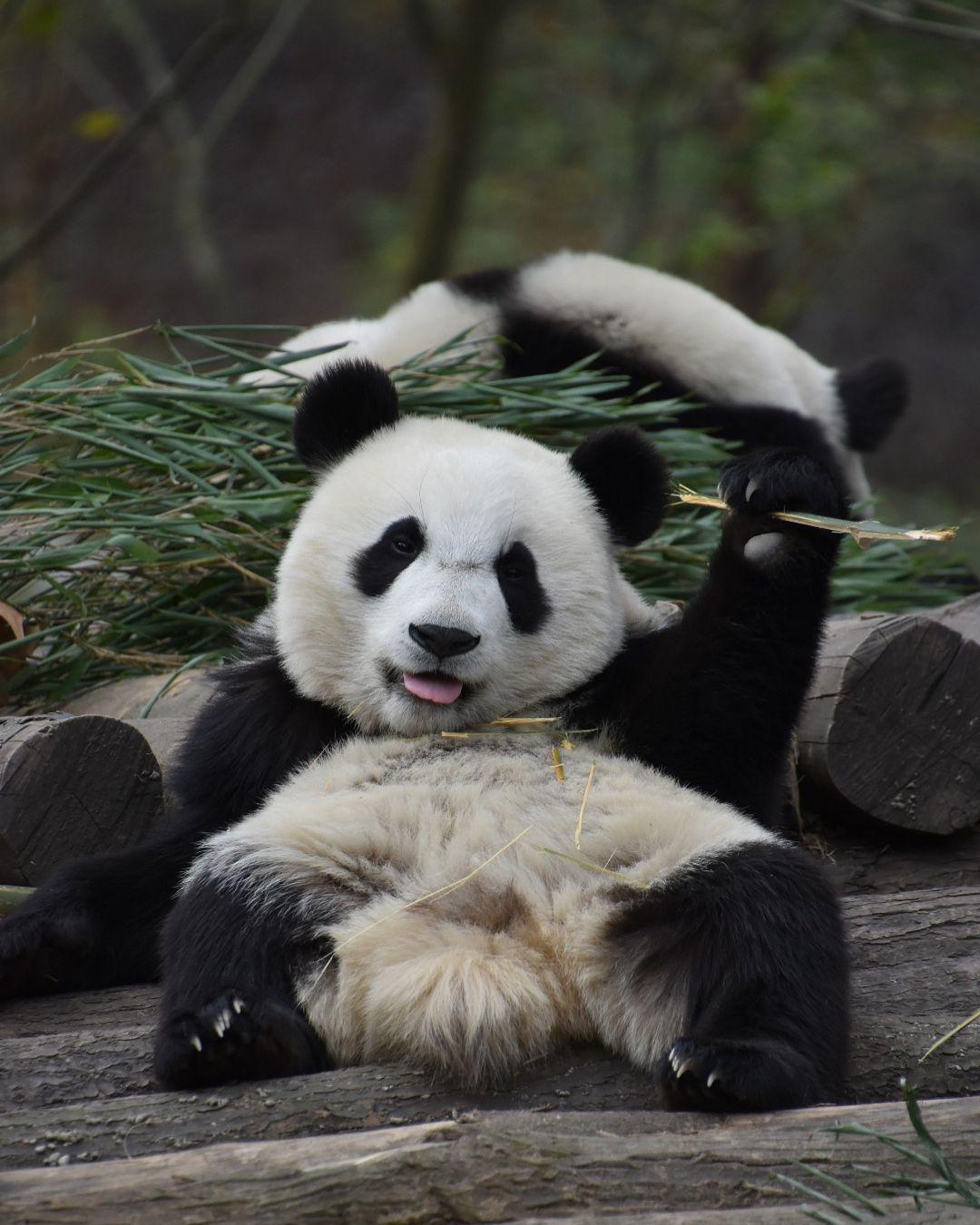 Маугли, панда прикольная картинки