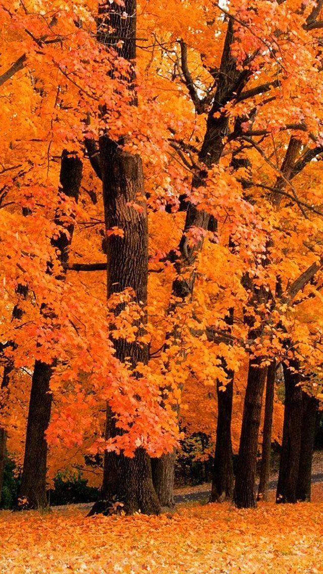 Fall iPhone Hintergrundbild 5 – Herbst #fallscenery