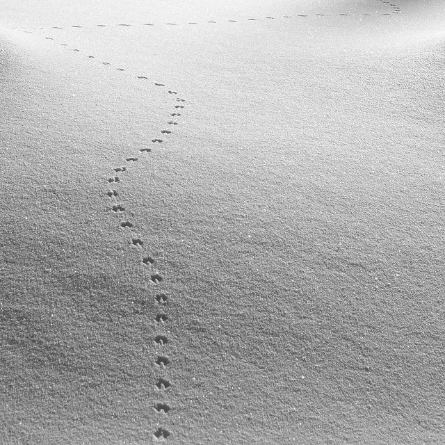 trail... by tlate hiin, via Flickr