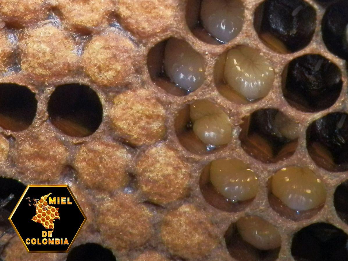 La polinización de las flores es vital para nuestra alimentación y para la biodiversidad, pero las abejas, unas de las principales encargadas de esta misión, están desapareciendo. Entre otros factores, mueren por la agricultura industrial y su uso de plaguicidas tóxicos. Es urgente, por lo tanto, cambiar el modelo de la agricultura industrial por una agricultura ecológica.