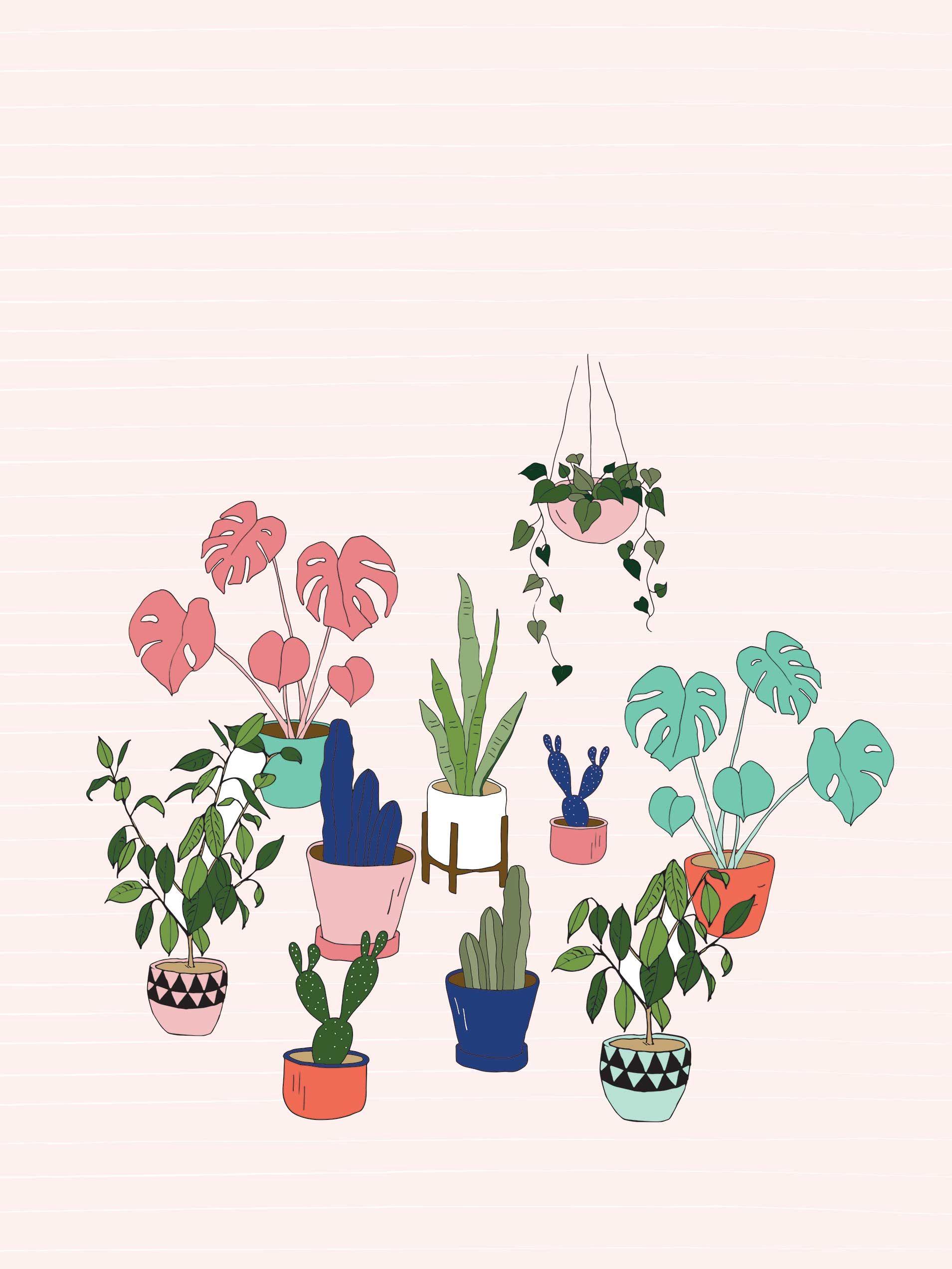 Urban jungle pot plant desktop wallpaper Plant wallpaper