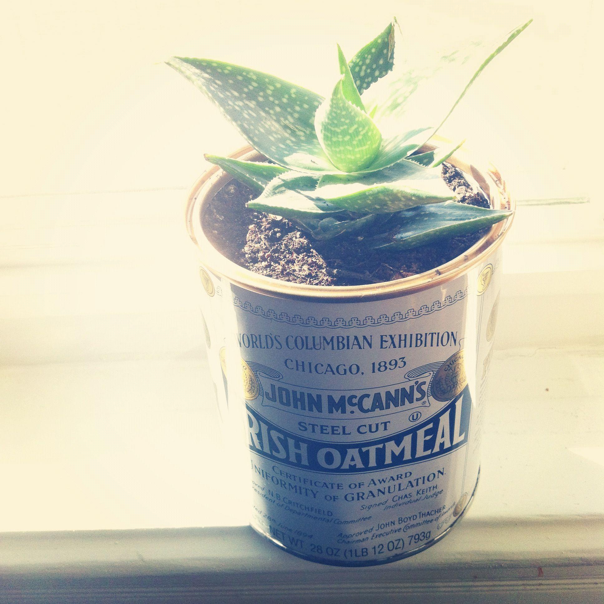 Reusing cans to pot studio plants.