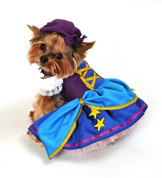 31 Adorable Holiday Pet Costumes For Christmas With Images Pet
