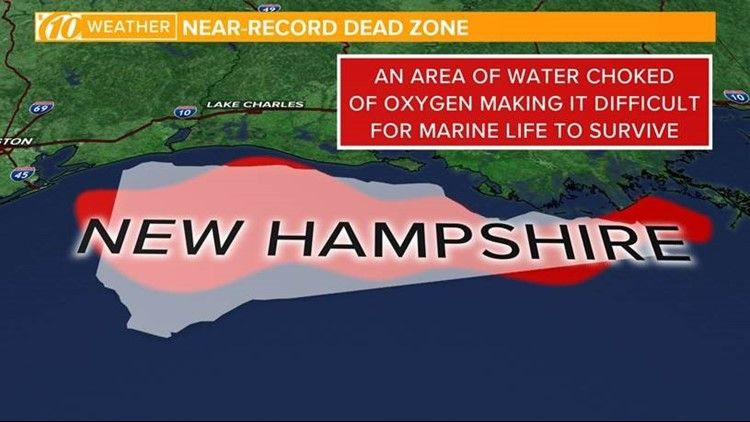 Marine Life Can T Live In The Gulf S Growing Dead Zone And It S Largely Our Fault Kvue Com Marine Life