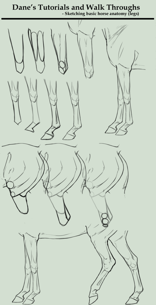 Tutorial/Walk Through - sketching horse legs by BaliroAdmin on ...