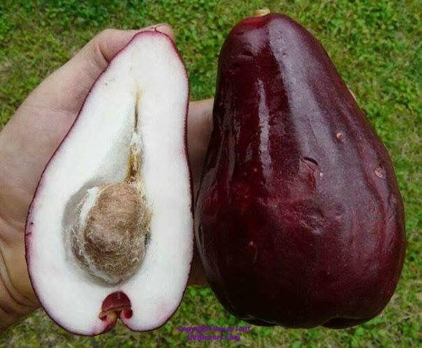 Pin By Ram Haridas On Guyana Fruits Pinterest
