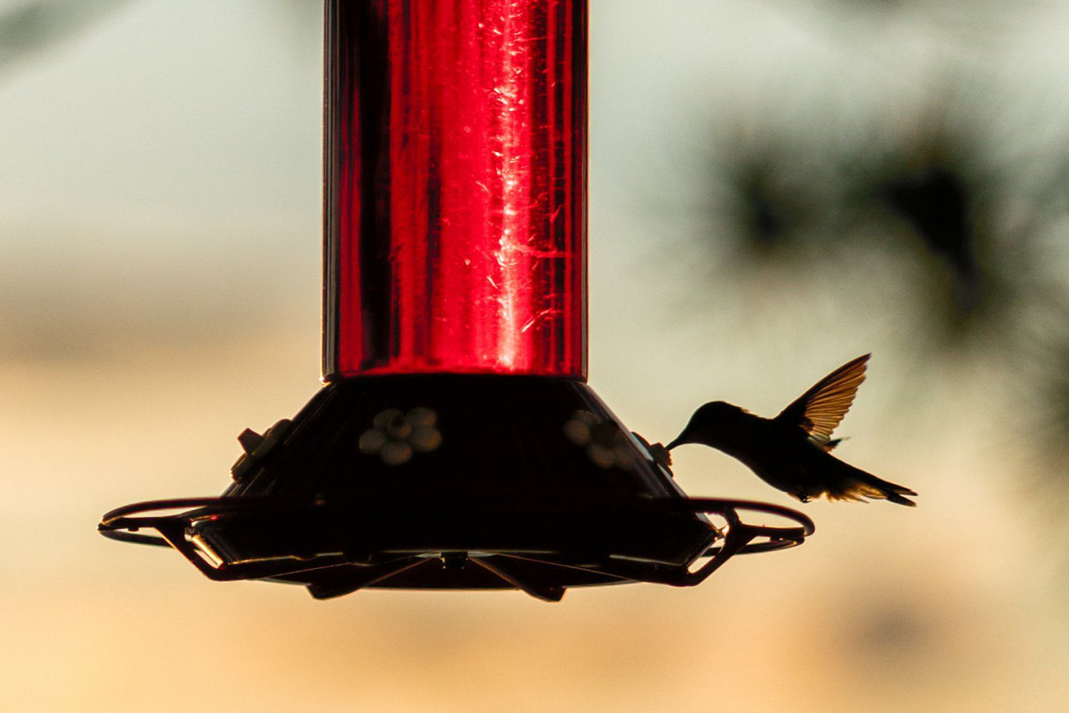 Top 10 Hummingbird Nectar Mistakes in 2020 (With images