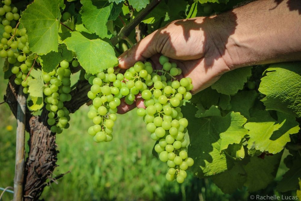 Lambrusco life in reggio emilia italian wine reggio