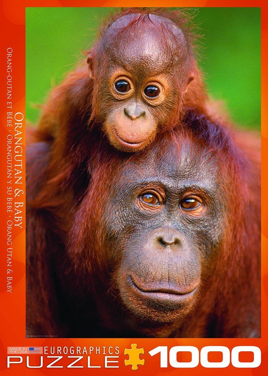 Piece Count 1000 Pieces Puzzle Size 19 25 X 26 625 48 89 X 67 63 Cm Age 13 Theme Animals Wildlife Manufacturer Eurograp Orangutan Animals Baby Orangutan