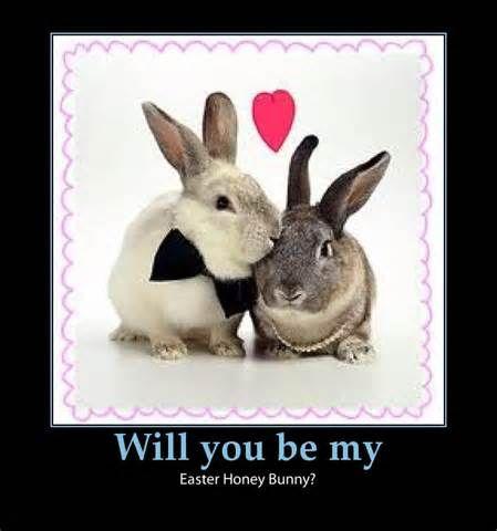 cute bunny quotes