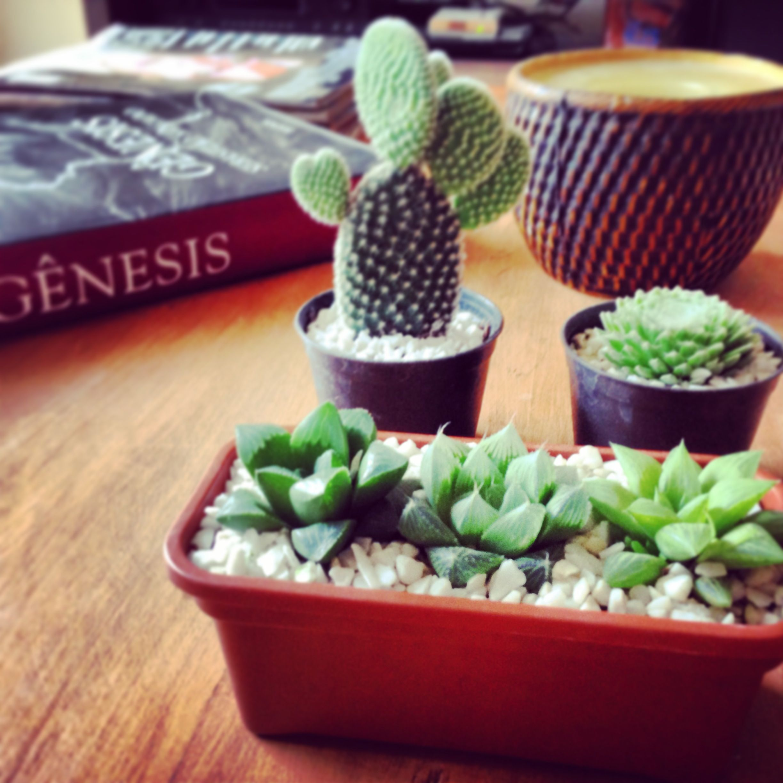 My little suculents garden