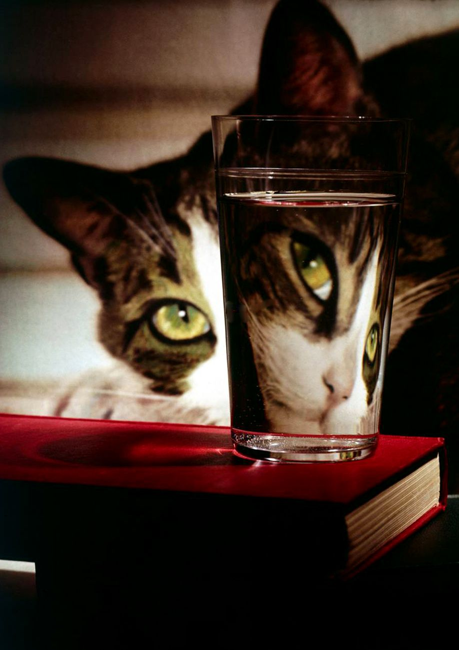 """""""A cat is a puzzle for which there is no solution."""" --Hazel Nicholson"""