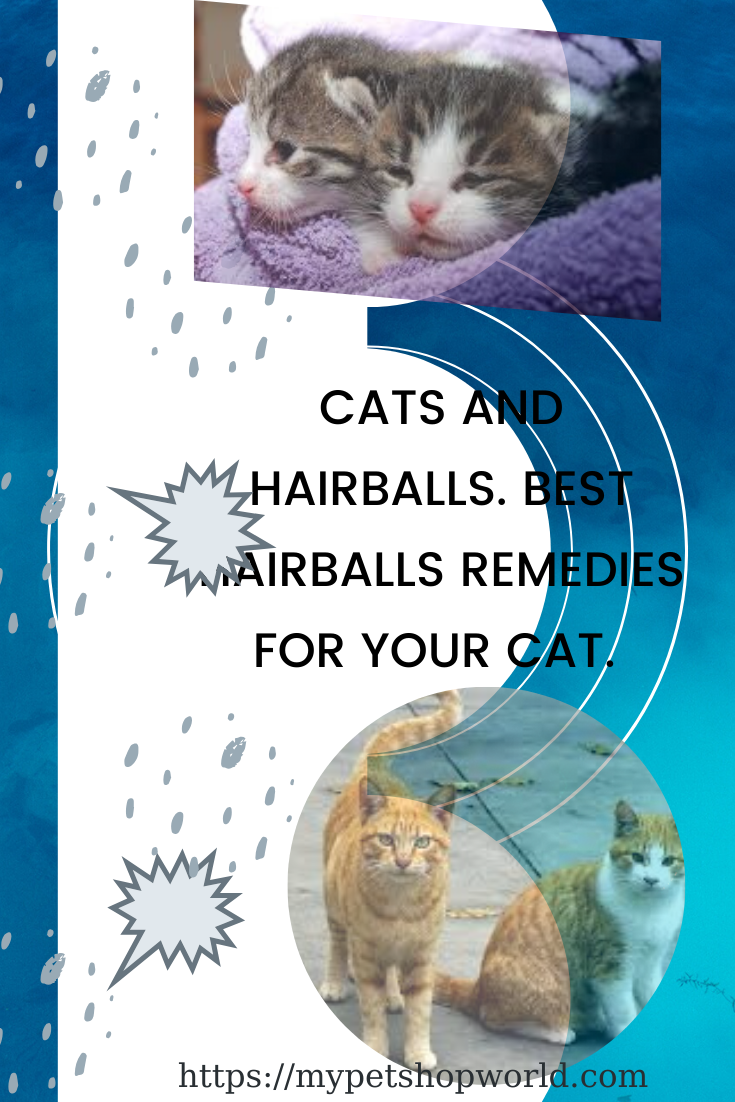 Cat And Hairballs Natural And Common Remedies For Your Cat In 2020 Cats Cat Day Buy A Cat