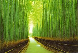 Bamboo - why is it better for the environment, better for us? www.redkitemasseuse.co.uk