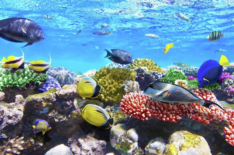 Arrecife coral reef puerto morelos riviera maya for Puerto morelos fishing