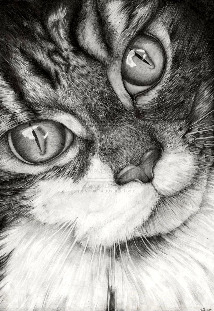 Фото кошек рисунки карандашом, картинки надписями