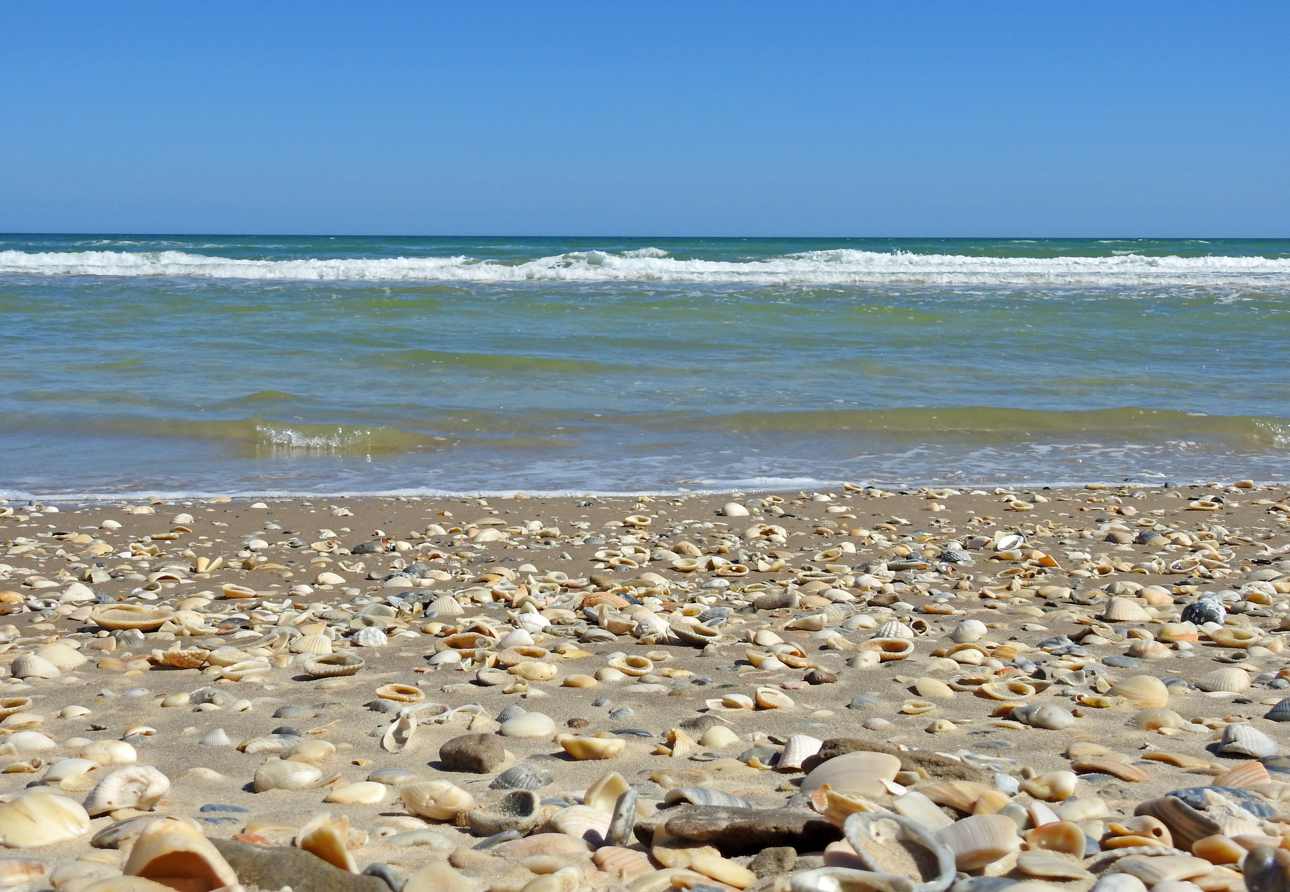 Shell Beach South Padre Island National Seas You Must Have 4 Wheel Drive To Reach This Remote Section Of