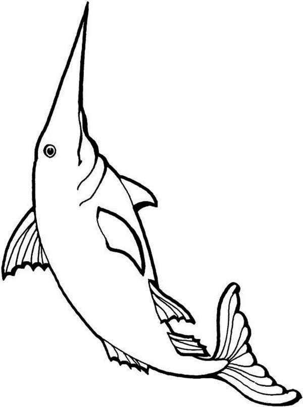 Long Bill Swordfish Coloring Page Color Luna Coloring Pages Color Swordfish