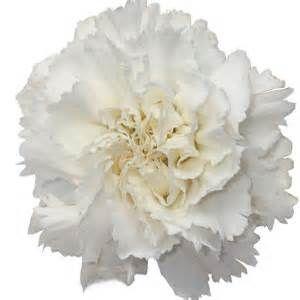 oeillets - ecosia   fleurs   pinterest
