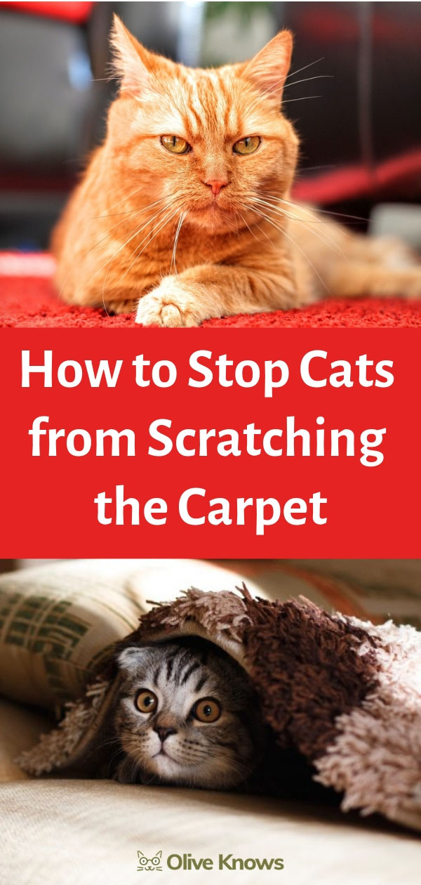 How To Stop Cats From Scratching The Carpet With Images Cat Training Cats Cat Safety