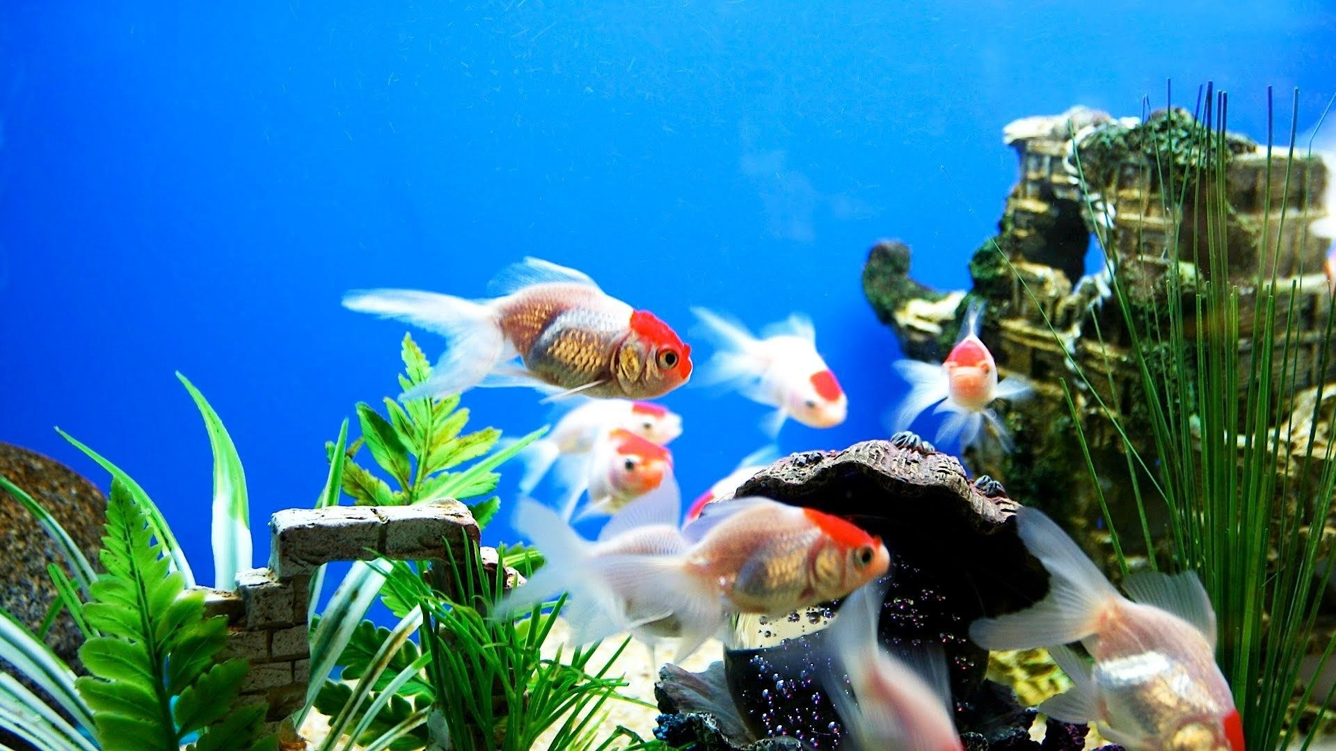 hd aquarium wallpaper o oshenka Pinterest