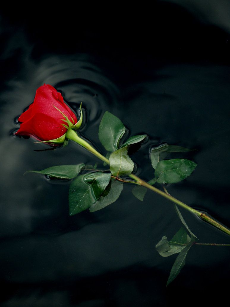 Red Rose 1 By Claforce One Word Is Closed Pinterest Red