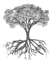 Botany Professor The Root Of The Root Problem Tree Of Life Tattoo Oak Tree Tattoo Roots Drawing