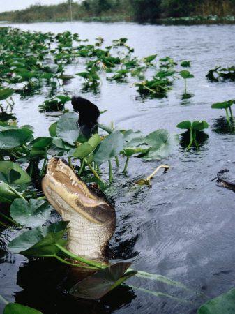 Miami Florida Everglades Everglades Miami Florida