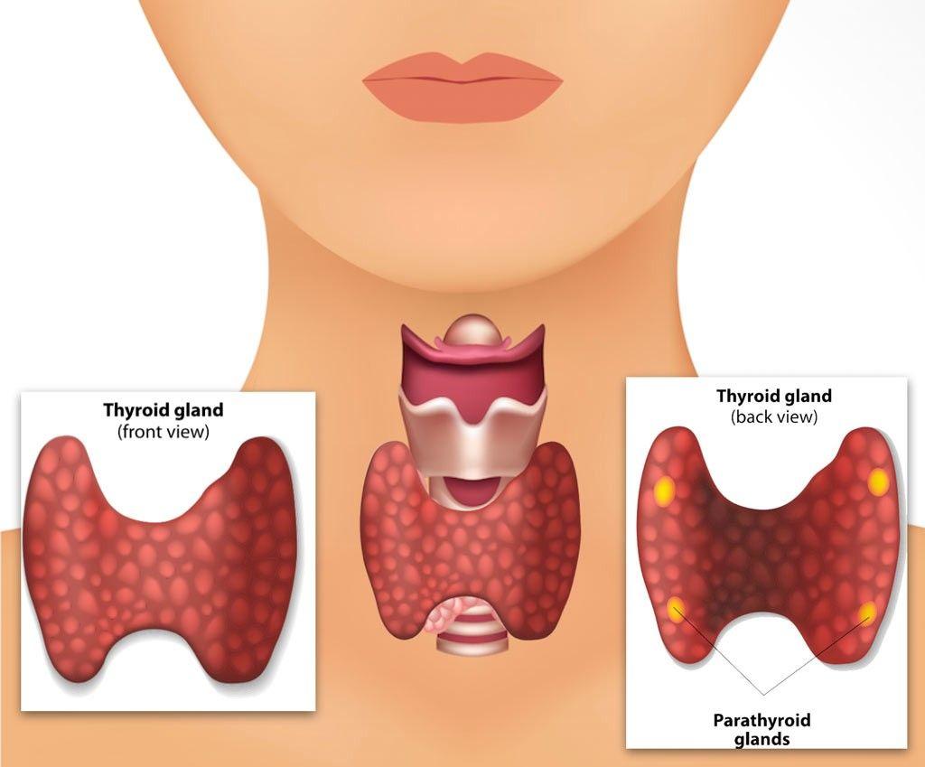 parathyroid gland definition disease symptoms function level test