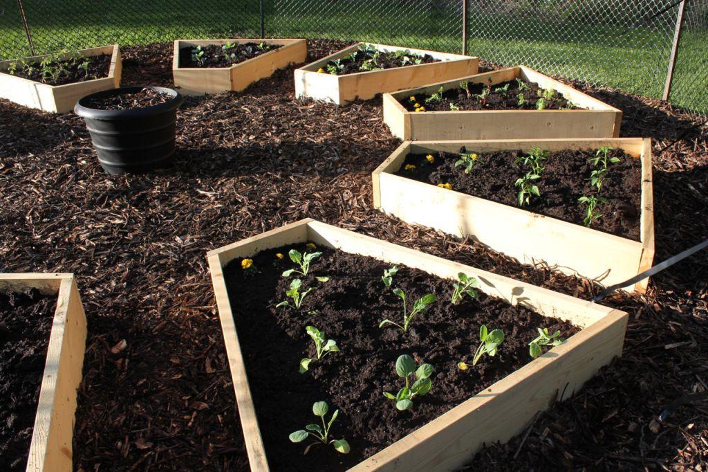 raised beds vegetable garden in a medicine wheel shape