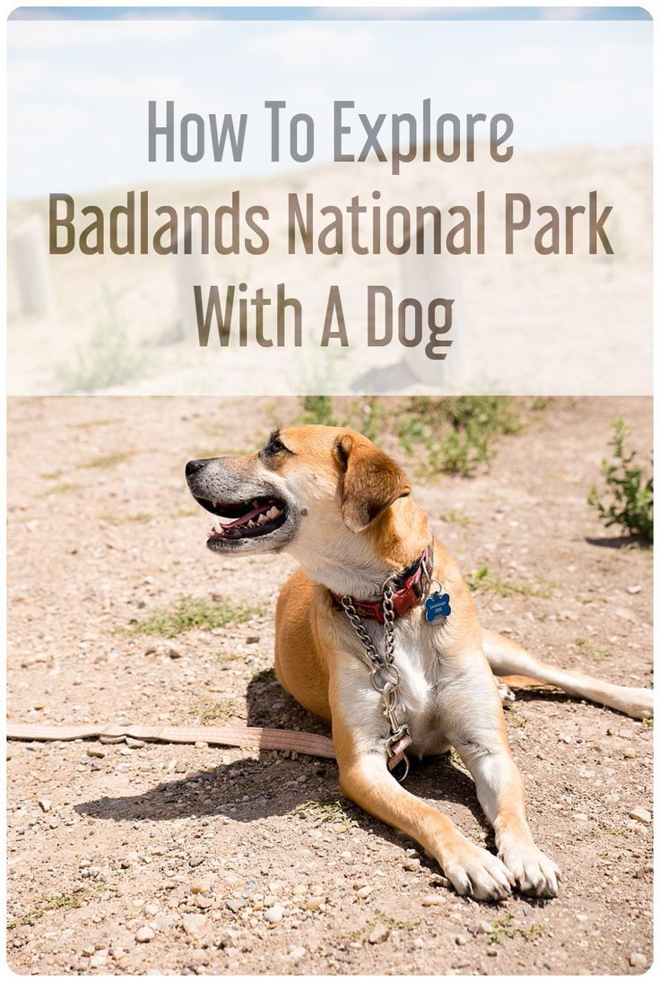 One Day In Badlands National Park With A Dog Adventures
