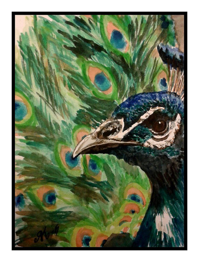 peacock by kiti83