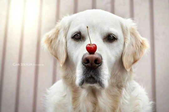 CUTIE WITH A CHERRY ON TOP! XD :D :) ^_^ ^.^ ♡ I give good credit to whoever photographed this