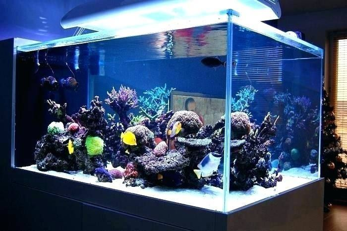 Saltwater Tank Decoration Ideas Decorating Ideas Aquarium