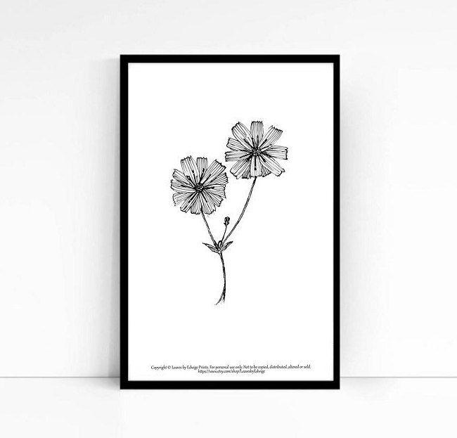 Black and white chicory flower print 5x7 inches monochrome house decor nature art