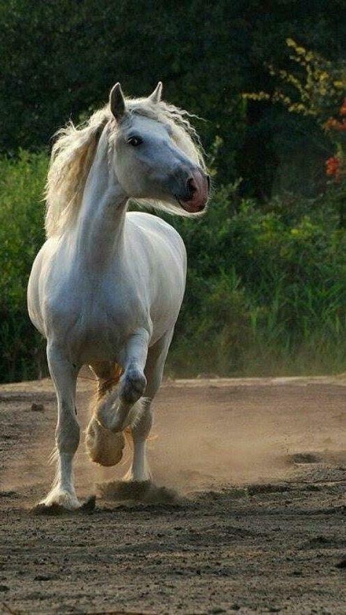 """,, BEAUTIFUL """" Schöne pferde, Hübsche pferde, Pferde"""