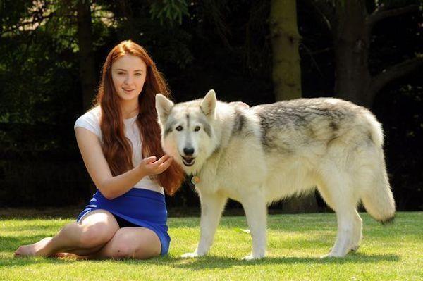 """Hoy hablamos de los """"lobos"""" de Juego de Tronos"""