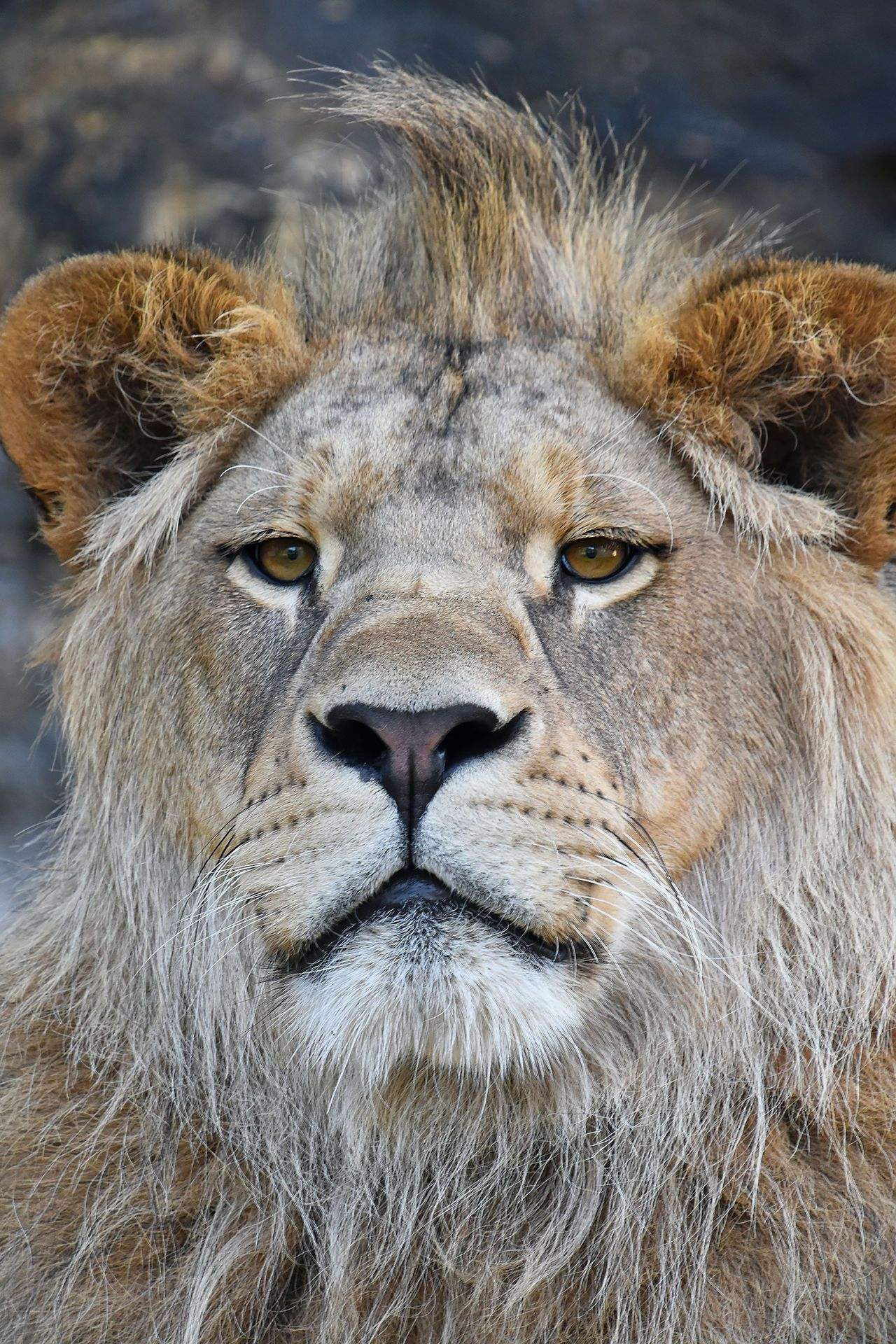 Animal Themes Animals In The Wild One Animal Mammal Portrait Animals Animals Wild Animals And Pets