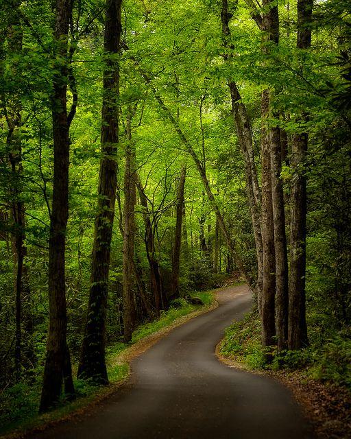Forest Tranquility fotografia stock. Immagine di tasmania