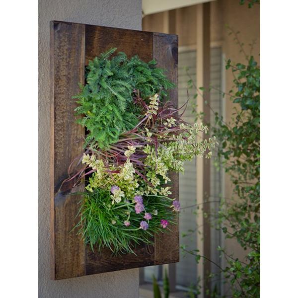 Grovert wall planter walnut frame kit indoor garden - Indoor living wall planter ...