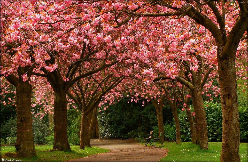 Saltwell Park, Gateshead - England
