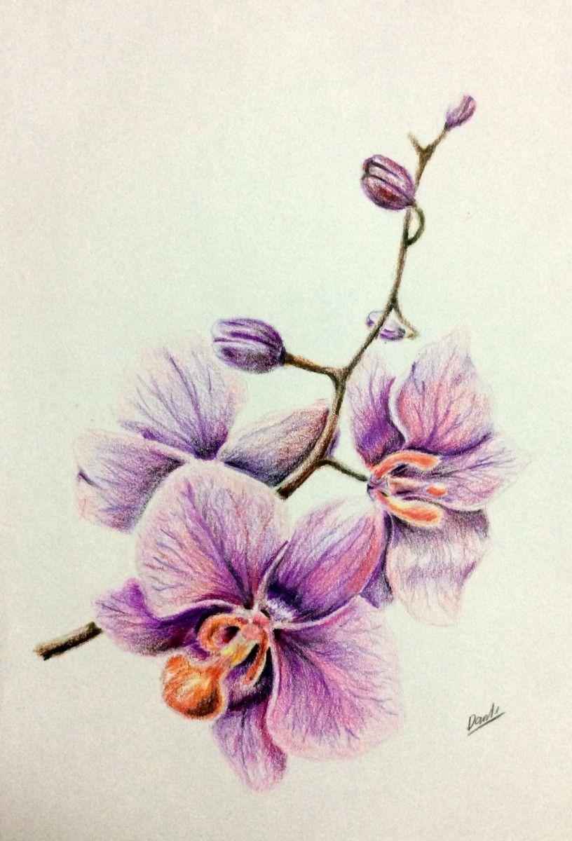 Drawing colored pencils orchid рисунок цветные карандаши