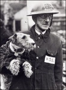Beauty, owned by PDSA Supt Bill Barnett of the charity's wartime animal rescue squads, helped to dig out 63 pets during the London Blitz. #animalrescue