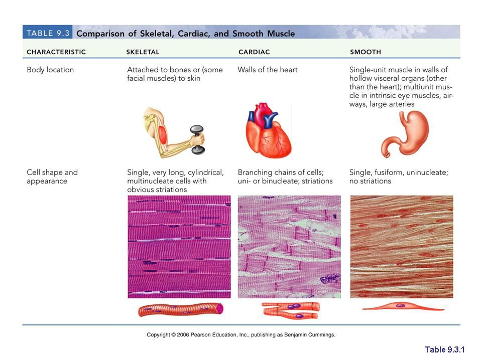 Muscle tissues: skeletal, cardiac, smooth muscle | nursing ...