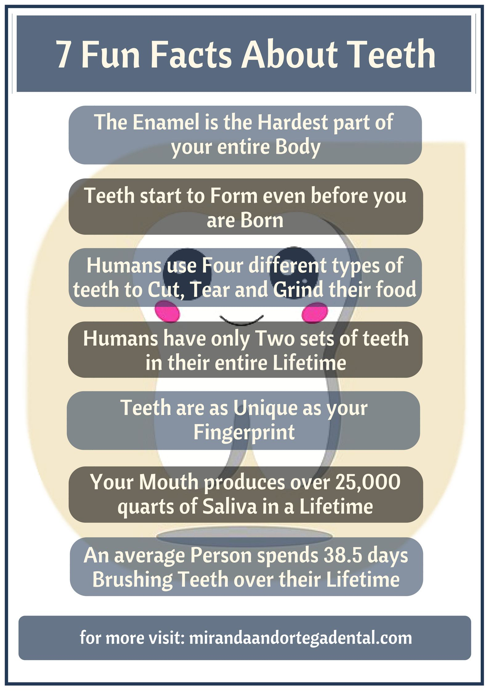 Here is a list of some fun facts on our teeth that we