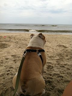 The Green Life A Visit To The Beach Pet Friendly Vacation