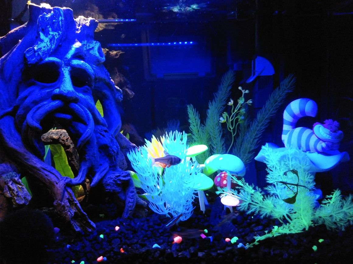 My Alice In Wonderland Themed Aquarium Is 90 Complete I Only