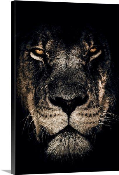 Dark Lion Closeup Solid-Faced Canvas Print