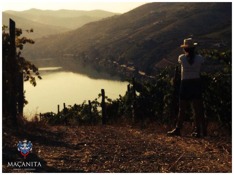 Pinhão in Vila Real #douro #macanita #harvest2015 #winelover #tasting #grapes #wine #portugal #vineyards www.macanita.com
