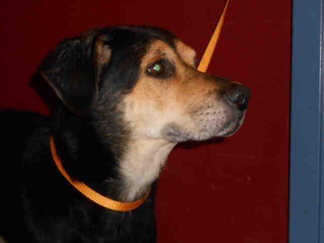 Happy Soo Lovable Pittsburgh Pa Petharbor Com Animal Shelter